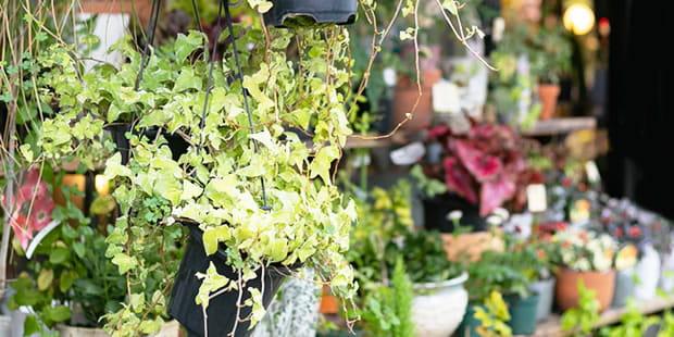 お庭や植え込みのプランニング